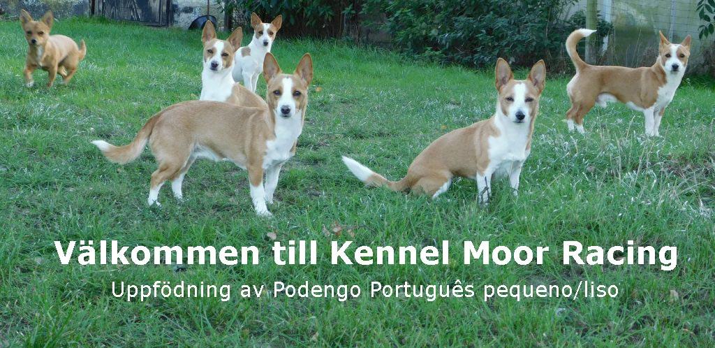 Titel Svensk Vinnare